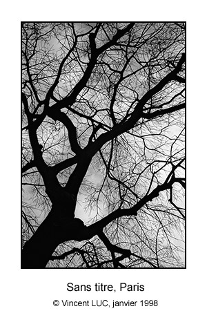Galerie Photo : Tete en l'air : Arbre, Paris, Photo noir et blanc © Vincent LUC